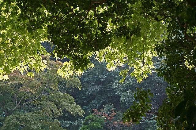 Kamakura08d26_x640.jpg