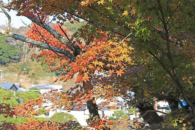 Kamakura1838_x660.jpg