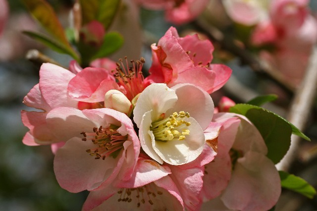 Sakura0810_x640.jpg