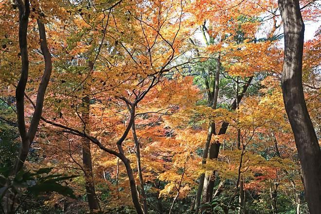 Shirokanedai1910_x660.jpg