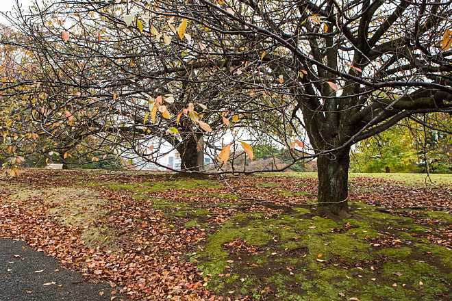 autumn15b10_x660.jpg