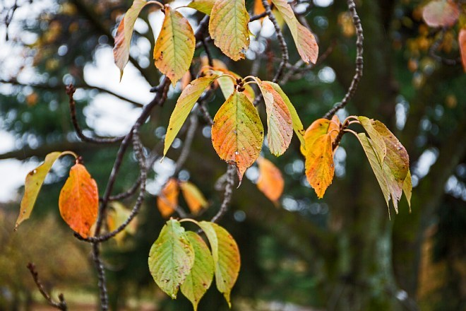 autumn15b11_x660.jpg