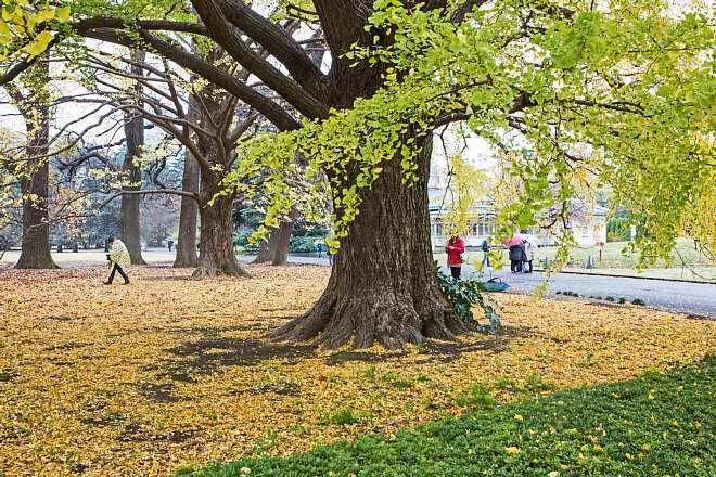 autumn15b20_x660.jpg