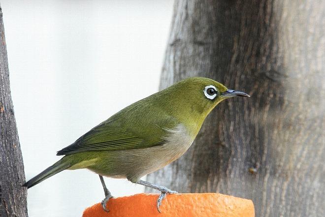bird09a18Aa_x660.jpg