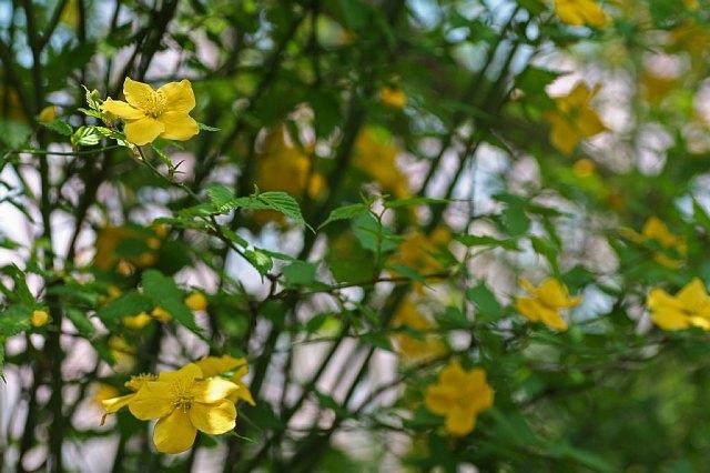 flower08a07_x640.jpg