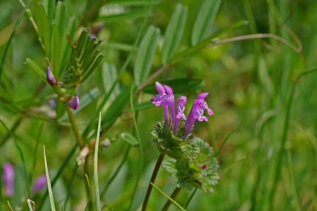 flower08a15_x640.jpg