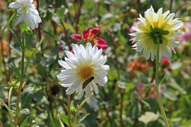 flowerpark1004_x640.jpg