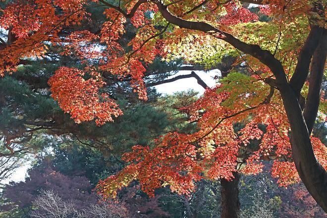 momiji2006_x660.jpg