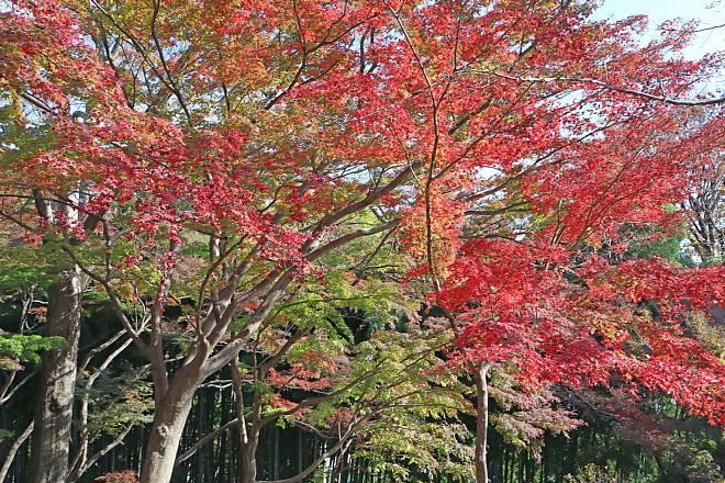 momiji2011_x660.jpg