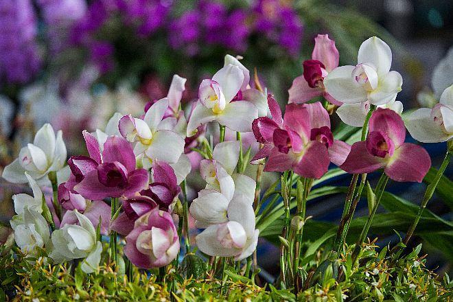 orchid1824_x660.jpg