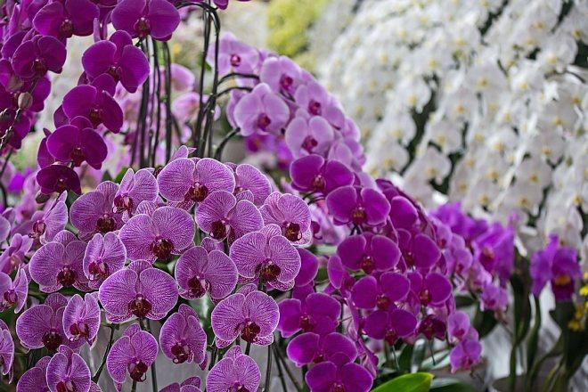 orchid1827_x660.jpg