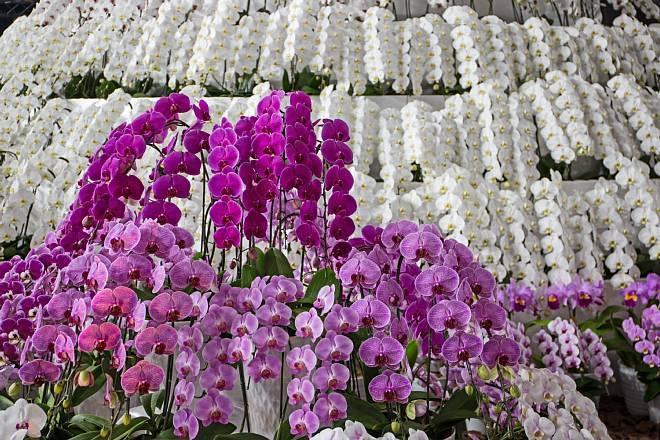 orchid1833_x660.jpg