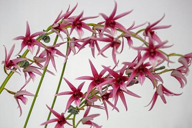 orchid1845_x660.jpg