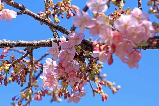 spring1309_x660.jpg