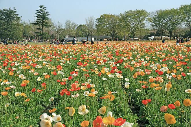 spring13b11_x660.jpg