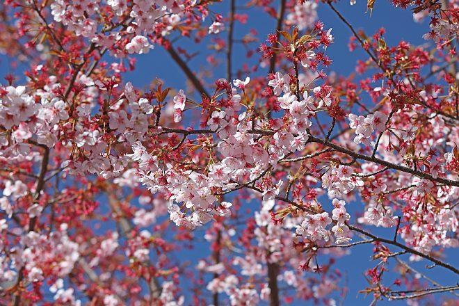 spring2012_x660.jpg