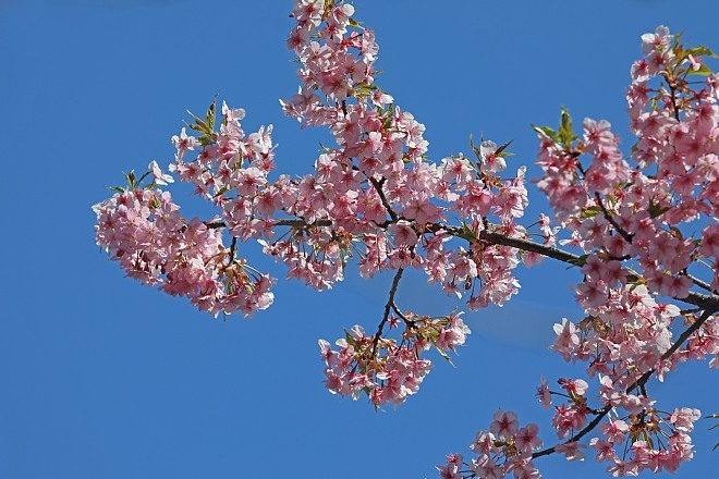 spring2016_x660.jpg