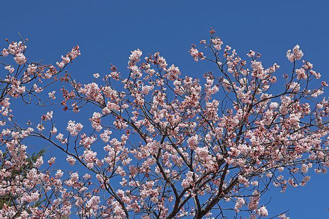spring2018_x660.jpg