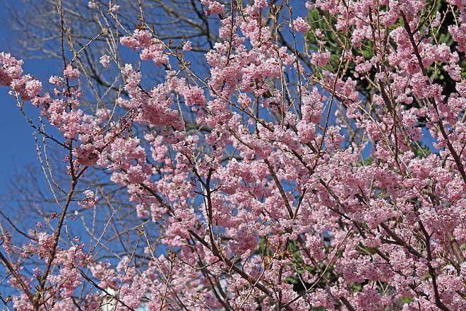 spring2023_x660.jpg