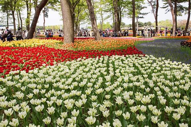 tulip1702_x660.jpg